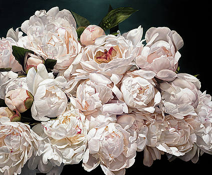 Peonies Eclater 166 X 200 cm by Thomas Darnell