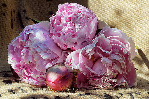 Peonies From The Garden by Phyllis Denton