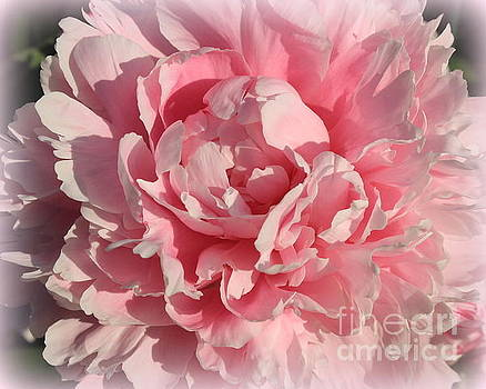 Peony Dreamy in Pink by Dora Sofia Caputo Photographic Art and Design