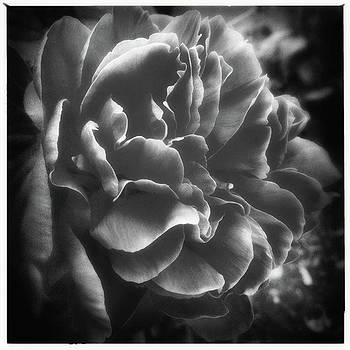 #peony In Black And White by Phunny Phace
