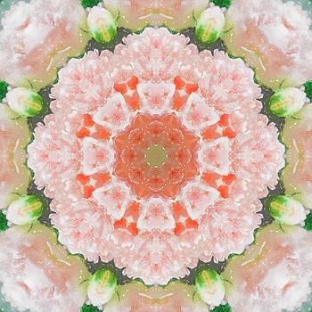 Peony Kaleidoscope 1 by Natalie Rotman Cote