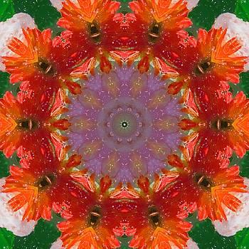Peony Kaleidoscope 2 by Natalie Rotman Cote