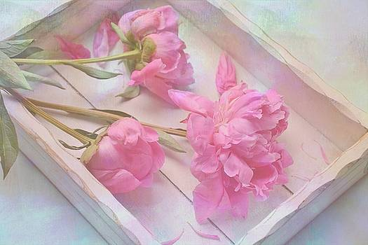 Peonies in White Box by Diane Alexander