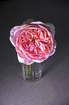 Peony Pink 2 in Water Glass 7337  by David Frederick