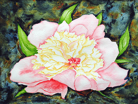 Peony by Vallee Johnson