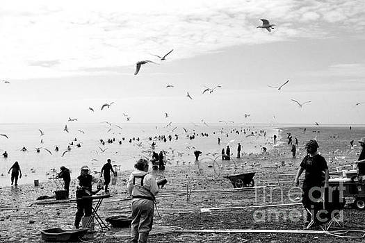 People and Birds Against Fish  1 by Tanya Searcy