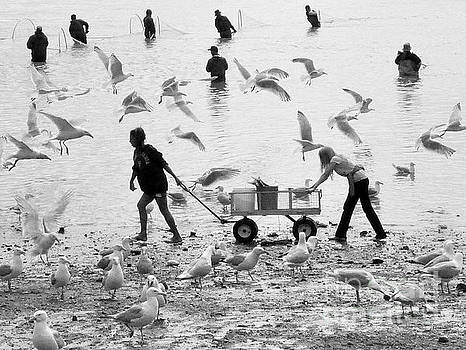 People and Birds Against Fish  3 by Tanya Searcy