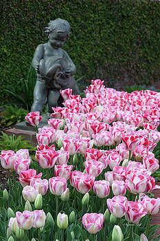 Peppermint Tulip Field by Suzanne Gaff