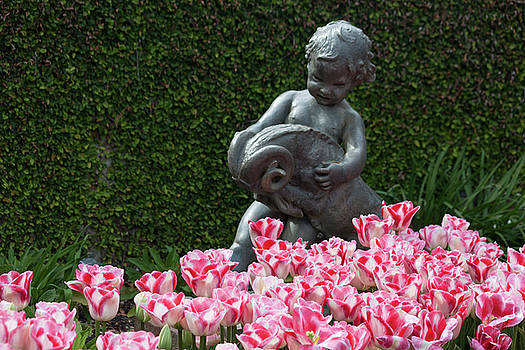 Peppermint Tulips by Suzanne Gaff