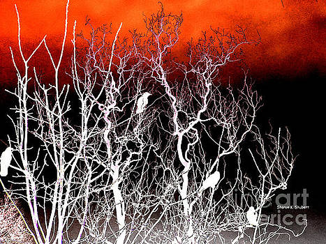 Perch by Sharon K Shubert