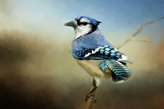 Perched Blue Jay by Lana Trussell