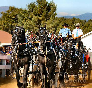 Sandra  Huston - Percheron Eight Horse Hitch