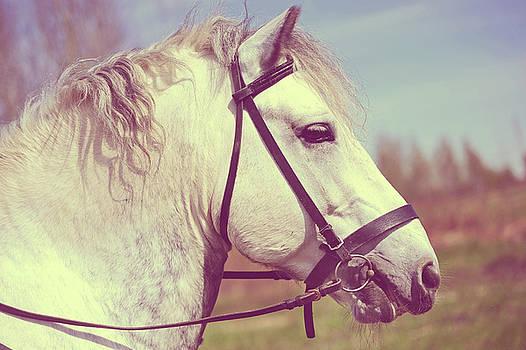 Jenny Rainbow - Percheron Horse Portrait