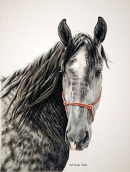 Percherons Day Out by Cat Deuter
