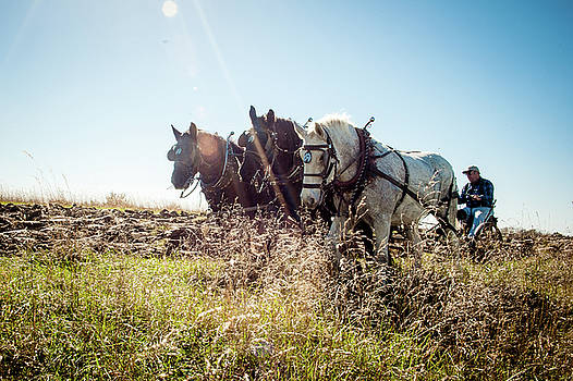 Percherons Plowing the Iowa Prairie by Leslie Heemsbergen