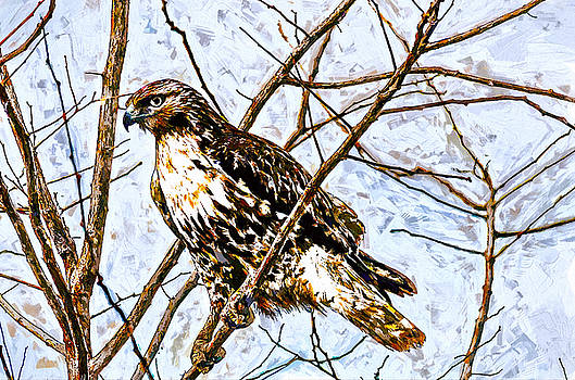 John K Woodruff - Perching Hawk