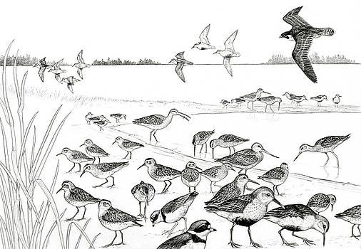 Peregrine and Shorebirds by Shari Erickson