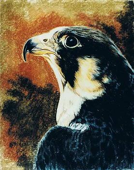 Barbara Keith - Peregrine Falcon