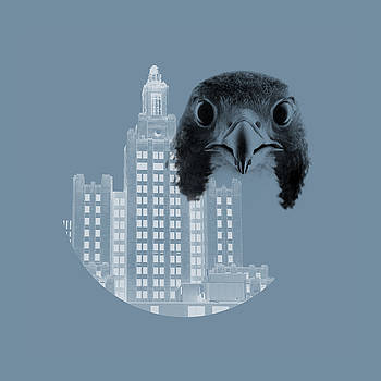 Peregrine Falcon with Industrial Trust Company Building by Peter Green