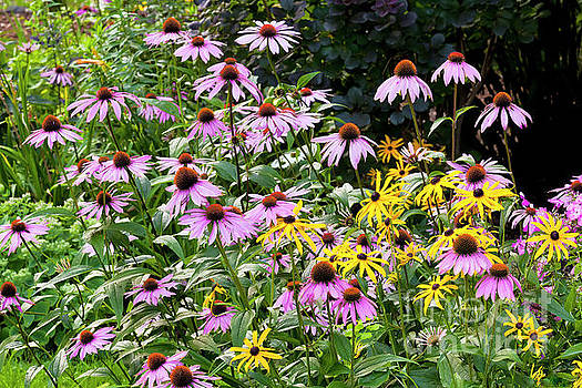 Perennial Flower Garden by Alan L Graham