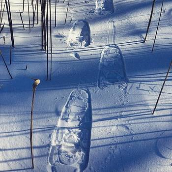 Perfect Day For The Snowshoes #winter by Carly Barone