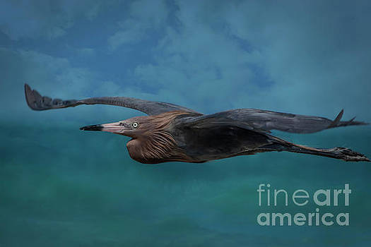 Perfect Flight To Paradise by Crissy Anderson