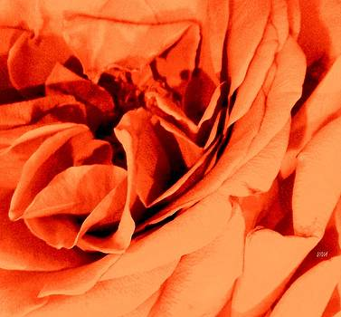 Perfect Rose-Close-up by VIVA Anderson