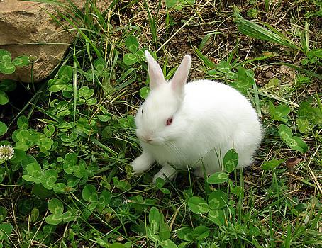 Alana  Schmitt - Perfect white rabbit