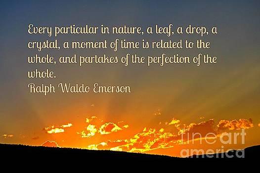 John Malone - Perfection of Nature