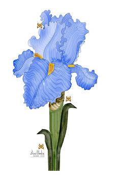 Periwinkle Blue Iris by Anne Norskog