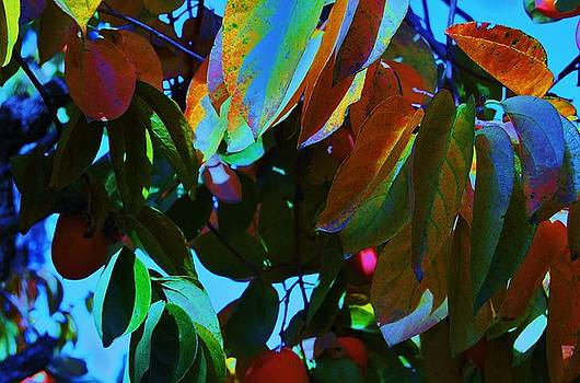 Persimmon 2 by Helen Carson