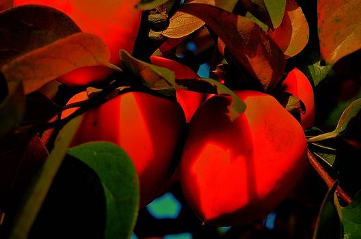Persimmon 5 by Helen Carson