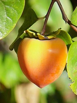 Persimmon by Heather Bethke