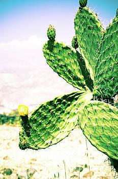 Peruvian Cactus by Susan Schumann