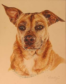 Pet Portrait Bailey by Cherie Sikking