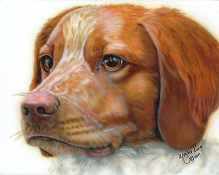 Pet Portrait - Britney Spaniel by Wayne Pruse