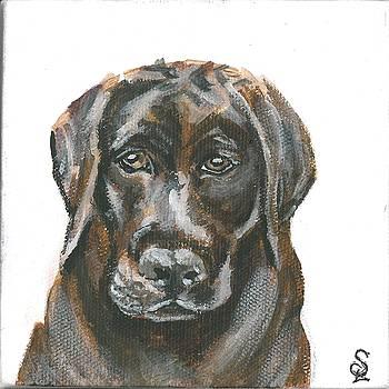 Pet Portrait - Choc Lab by Sarah Lowe