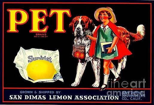 Peter Gumaer Ogden - PET Saint Bernard 1920s California Sunkist Lemons