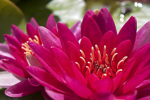 Stewart Scott - Petal bloom