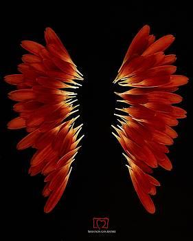 Petal Wings by Shannon Gan Dathu