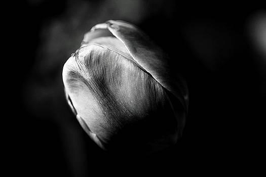 Petals by Brian Pflanz