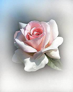 Petals by Robert Foster