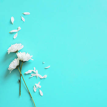 Valdecy RL - Petals White