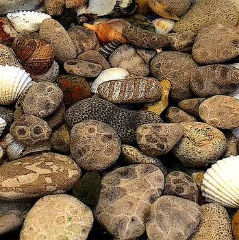 Michelle Calkins - Petoskey Stones with Shells l