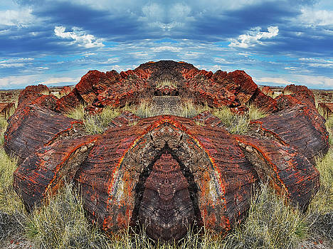Petrified Forest Arizona Mirror by Kyle Hanson