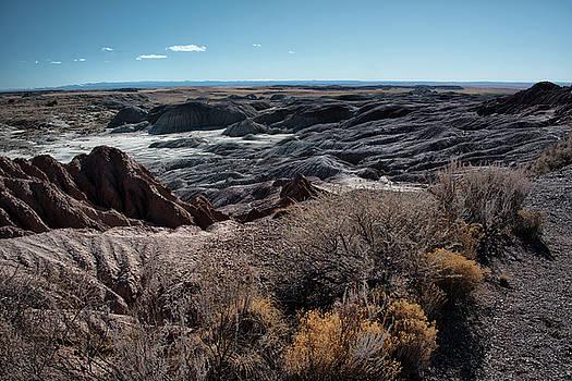 Petrified Forest Landscape by Gej Jones
