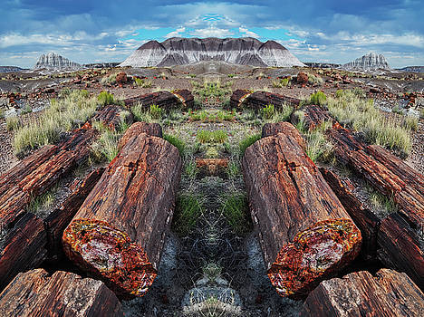 Petrified Forest Mirror by Kyle Hanson