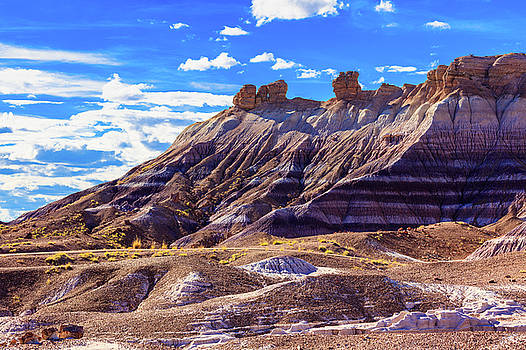 Petrified Forest V by Raul Rodriguez