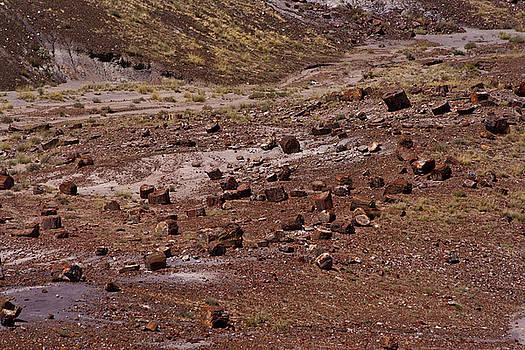 Petrified Wood #3 by Robert J Caputo