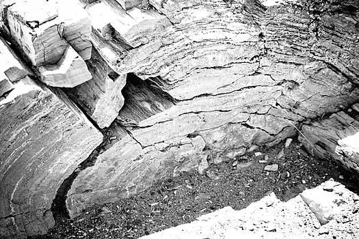 Petrified Wood #5 by Robert J Caputo